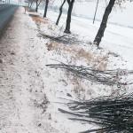 Obcięte gałęzie pod drzewami są widoczne na całej długości wsi.